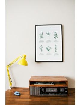 Poster / Plants / B1